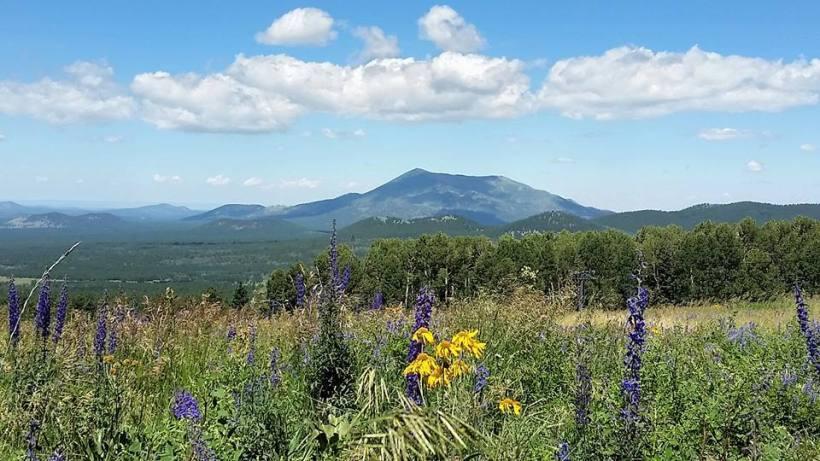 Flagstaff Mountain Flowers