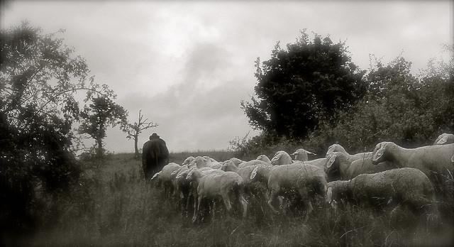 A Sheperd by Lauri Heikkinen