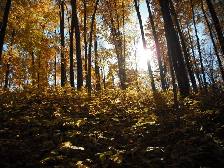 Sun Thru the Woods